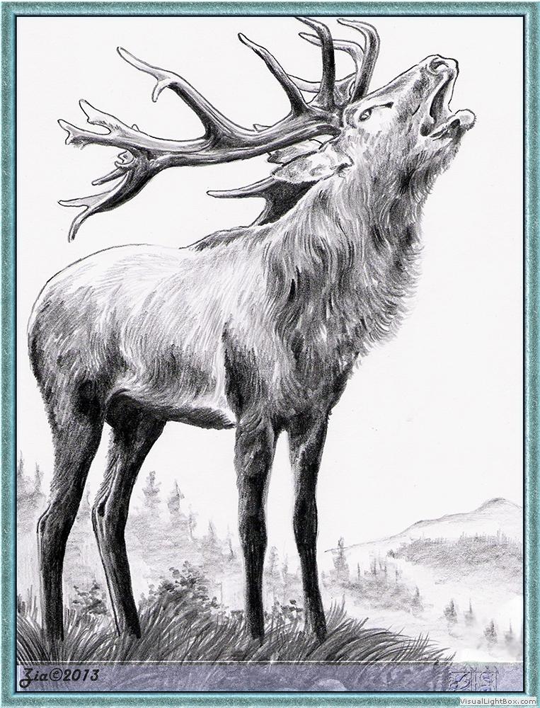 Kresba-Divoká zvířata – akaicz-studio