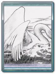 zvirata-2-labut