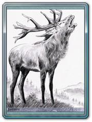 zvirata-jelen