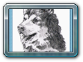 06 pes