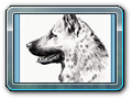 13 pes